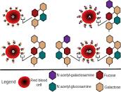 Photo of नेपालमा फेरी १ जनामा कोरोनाको संक्रमण देखिएसंगै संक्रमितको संख्या ४ पुगेको छ, लक्षणहरू र बच्ने उपायसहित