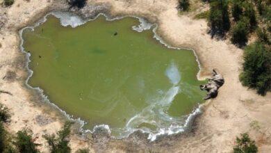 Photo of पानी जमेको खाल्डोमा डुबेर एकै परिवारका दुईजना बालकको मृत्यु