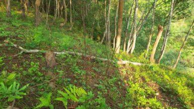 Photo of आँबुखैरेनीमा मर्निङ वक ट्र्याक बन्दै।।