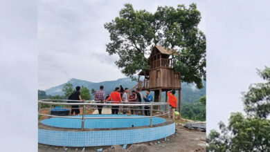 Photo of Tree House lures Tourists